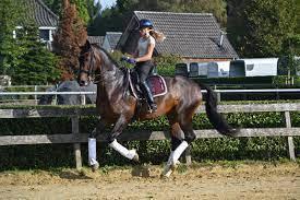 [2022] Paardrijden in de leiestreek - Pasen - Bissegem
